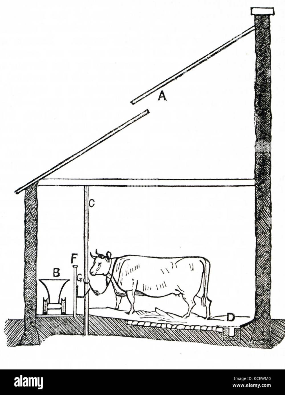 medium resolution of engraving depicting a diagram of a cow house in england a cow house is a