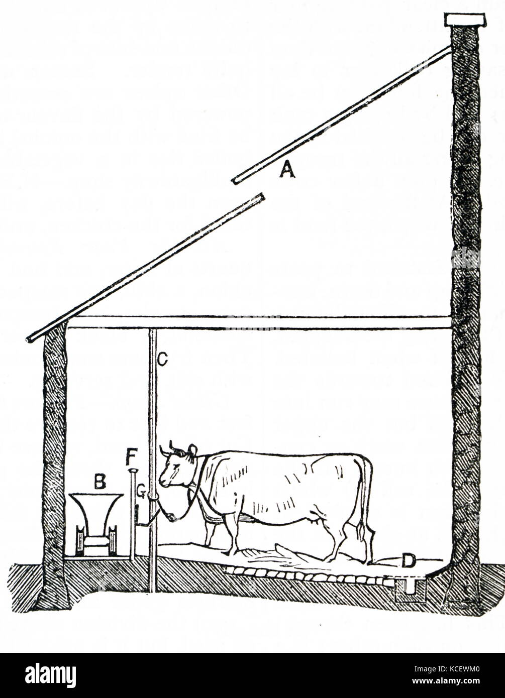 hight resolution of engraving depicting a diagram of a cow house in england a cow house is a