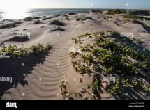 Hermosillo Sonora Beaches