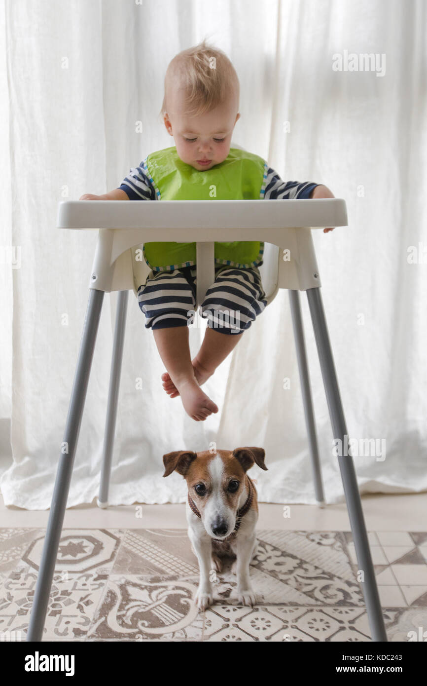 dog high chair beach towels with pocket for lounge cute boy and under on a white background stock photo