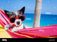 Dog Deck Chair Stock Photos & Dog Deck Chair Stock Images ...