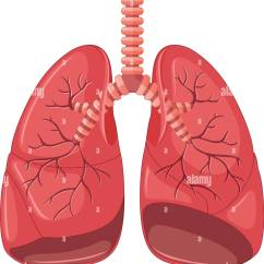 Lung Diagram Drawing Simple Hot Rod Wiring Cancer Stock Photos And