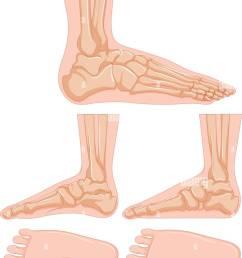 diagram of human foot bone illustration [ 972 x 1390 Pixel ]