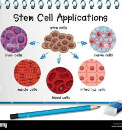 diagram showing different stem cell applications illustration stock image [ 1300 x 1197 Pixel ]