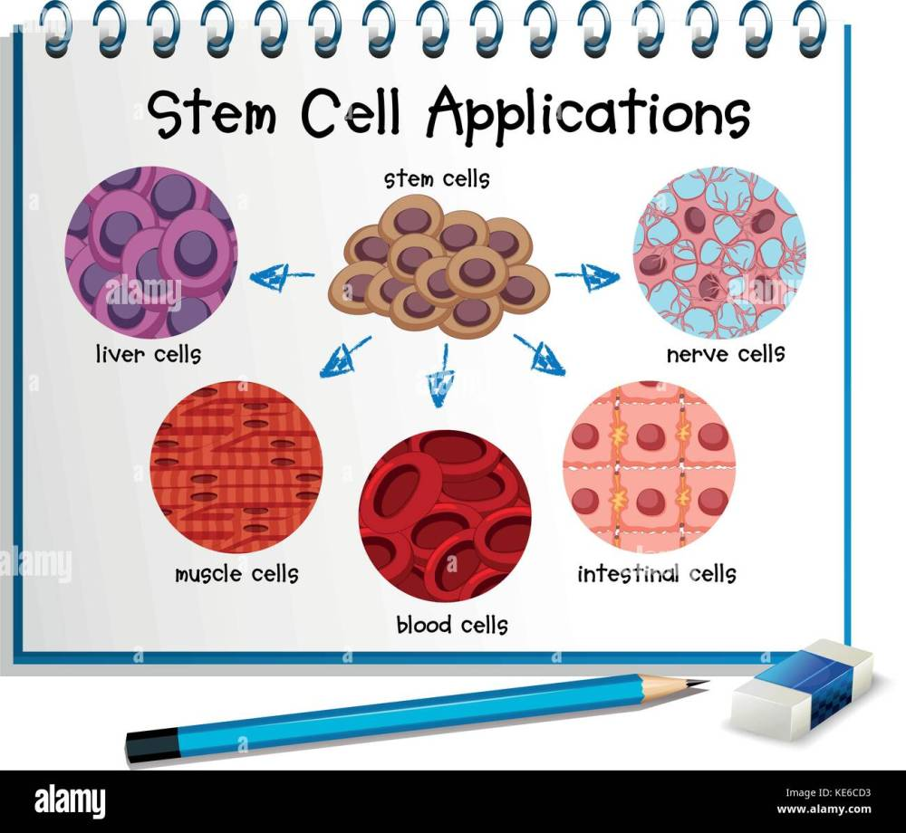 medium resolution of diagram showing different stem cell applications illustration stock image
