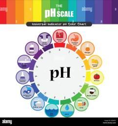 the ph scale universal indicator ph color chart diagram acidic alkaline values common substances vector illustration flat icon design colorful [ 1300 x 1331 Pixel ]