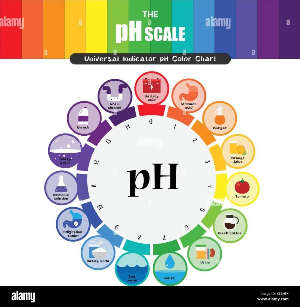 medium resolution of the ph scale universal indicator ph color chart diagram acidic alkaline values common substances vector illustration flat icon design colorful