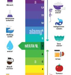 the ph scale universal indicator ph color chart diagram acidic alkaline values common substances vector illustration flat icon design colorful [ 615 x 1390 Pixel ]