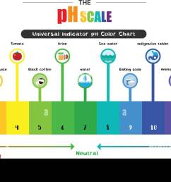 the ph scale universal indicator ph color chart diagram acidic alkaline values common substances vector illustration flat icon design colorful [ 1300 x 698 Pixel ]