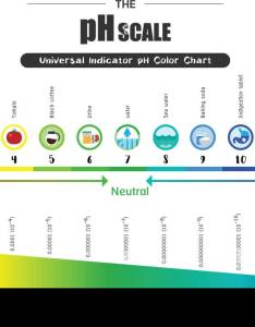 The ph scale universal indicator color chart diagram acidic alkaline values common substances vector illustration flat icon design colorful also stock rh alamy