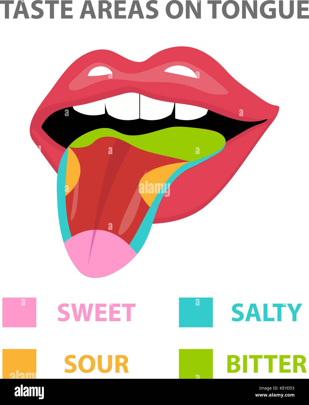 health tongue diagram how to read wiring taste buds stock photos and