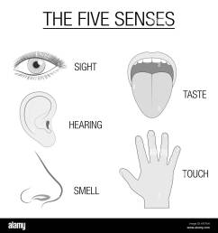 eye ear tongue nose and hand five senses chart with sensory organs [ 1299 x 1390 Pixel ]