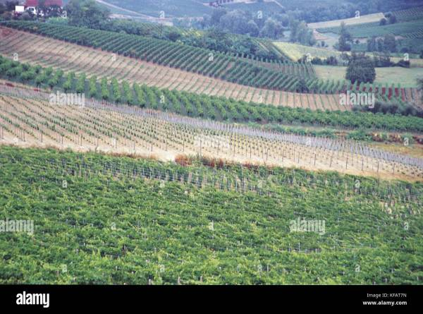 Nizza Monferrato Stock Photos Nizza Monferrato Stock