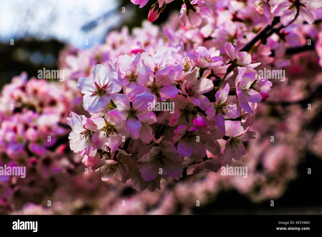 japan screensaver stock photos