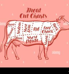 cow beef meat cuts scheme or diagrams for butcher shop vector illustration [ 1300 x 1008 Pixel ]