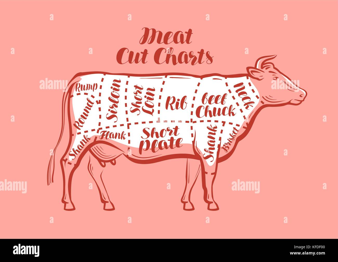 hight resolution of cow beef meat cuts scheme or diagrams for butcher shop vector illustration