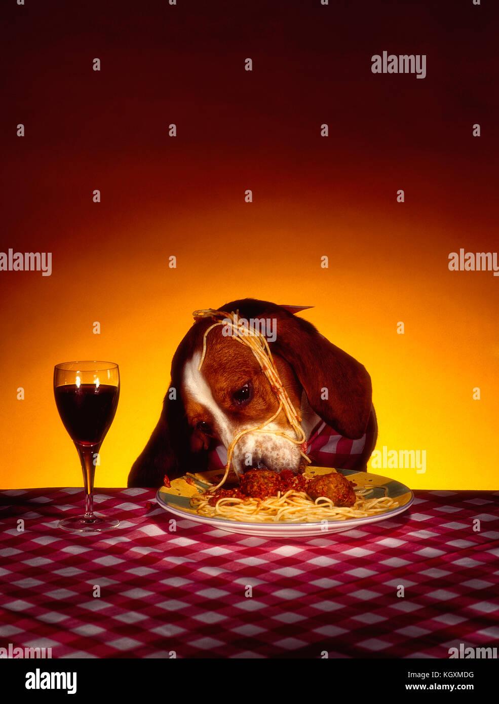 Spaghetti Dog : spaghetti, Eating, Spaghetti, Stock, Photo, Alamy