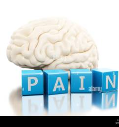 human brain with pain word in cubes science anatomy concept isolated [ 1300 x 1051 Pixel ]