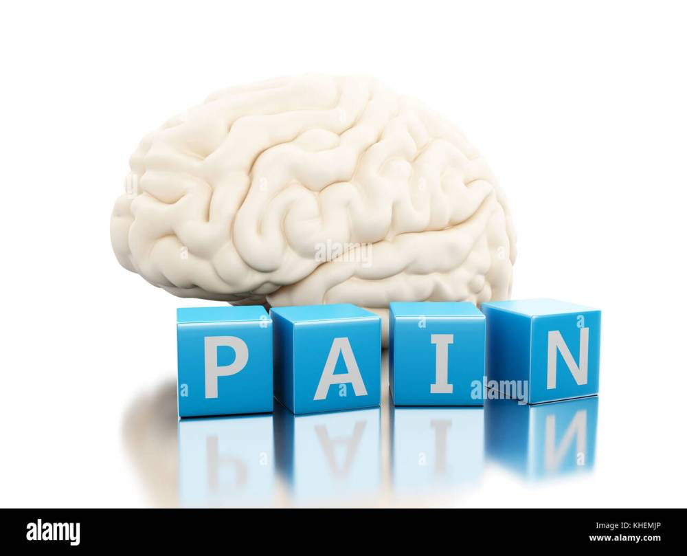 medium resolution of human brain with pain word in cubes science anatomy concept isolated