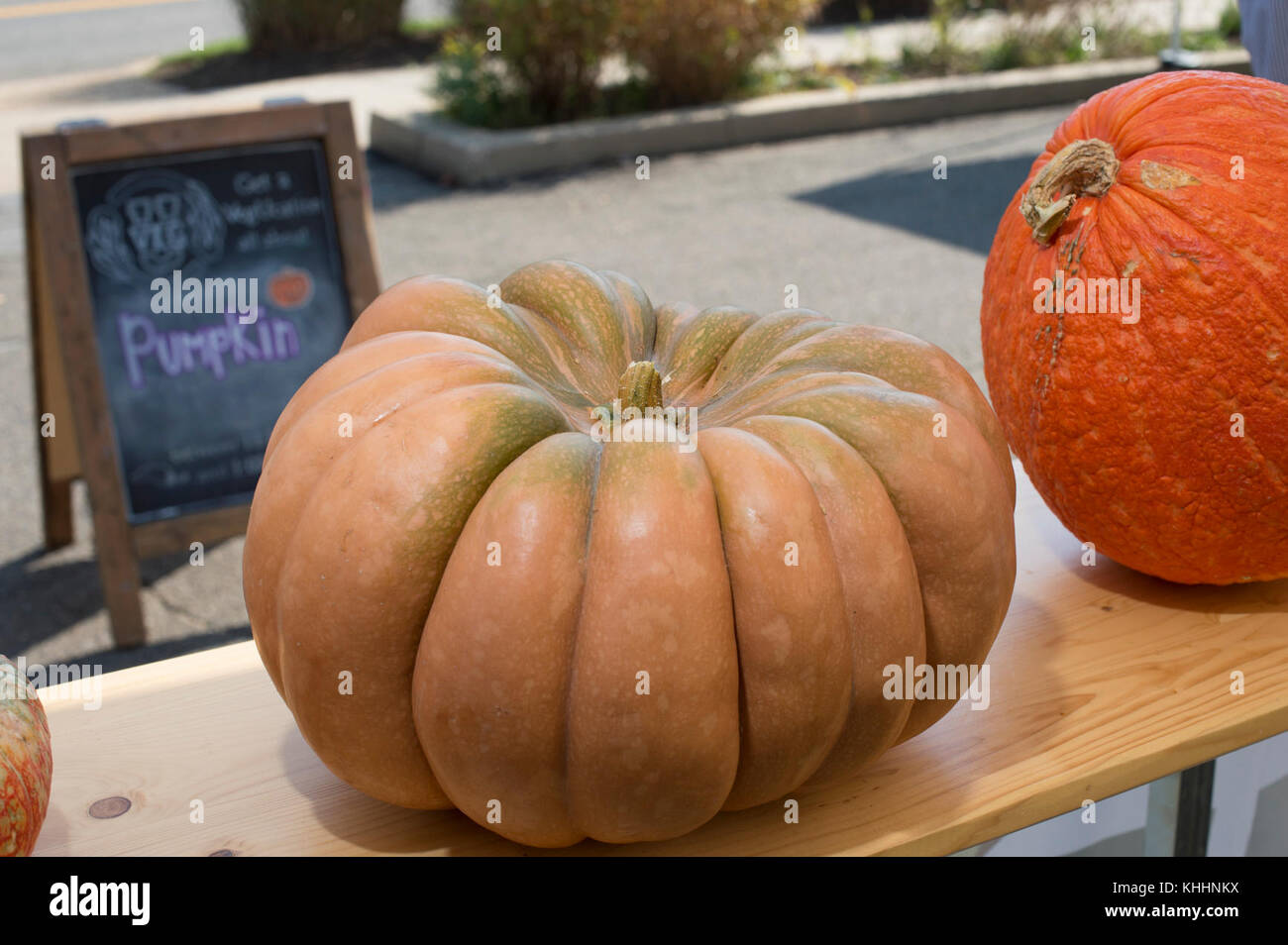 hight resolution of the orange fluted and flat fairytale pumpkin and the deep orange and rough surfaced warty