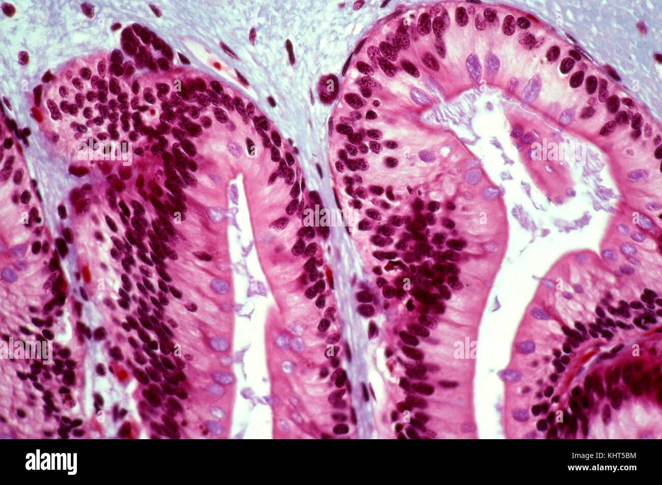 euglena diagram labeled 400 magnification 1998 dodge durango infinity stereo wiring 400x stock photos and images alamy