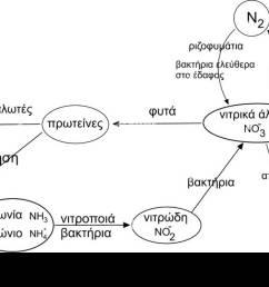nitrogen cycle el stock image [ 1300 x 749 Pixel ]