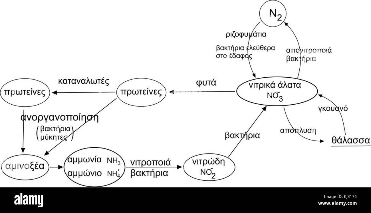 hight resolution of nitrogen cycle el stock image