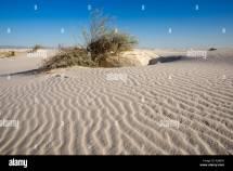 Chihuahua Desert White Sands Stock &