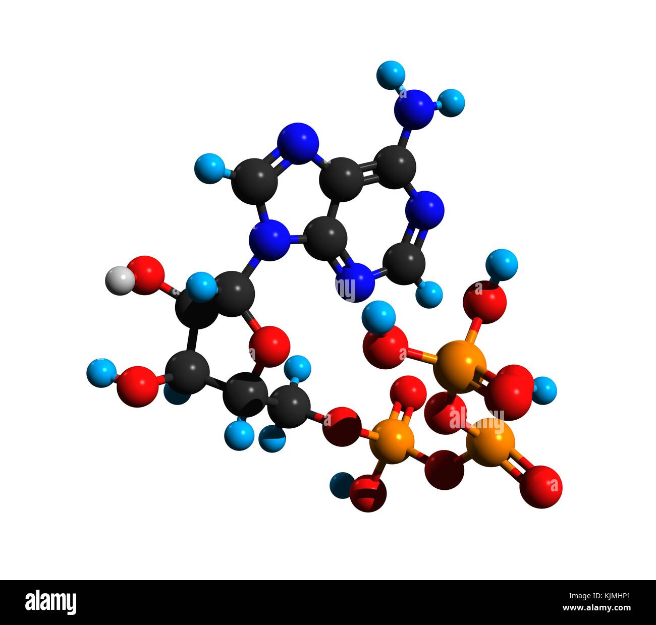 diagram of the atp molecule 2007 saab 9 3 wiring stock photos and images alamy