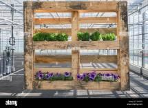 Pallet Garden Stock &