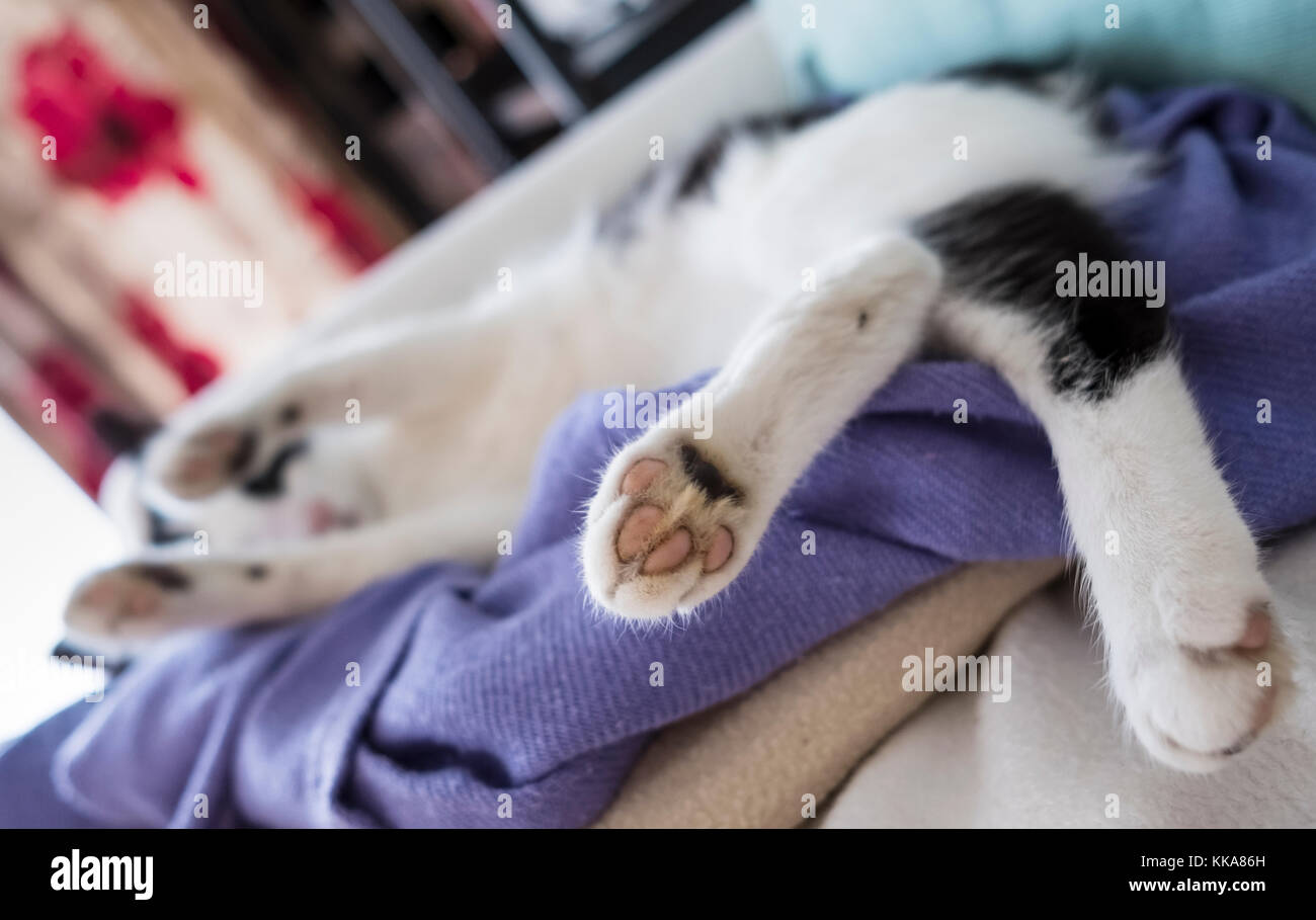 sofa bison cat raymour and flanigan red bed frisky stock photos images alamy