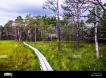Estonia National Flower Stock &