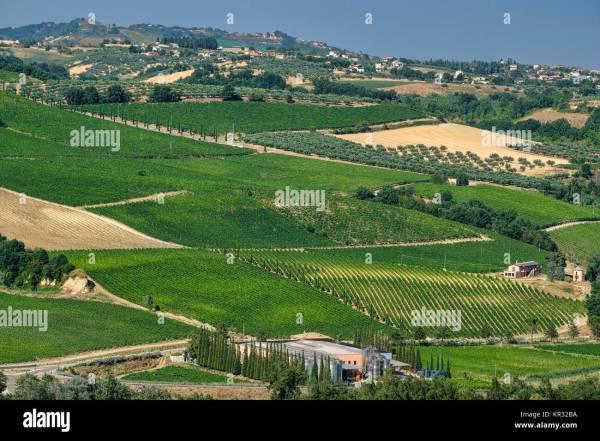 Abruzzo Italy Vineyard Stock Photos Abruzzo Italy