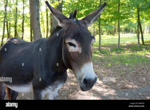 d40a0f8a0c 20+ Donkey Face Glasses Pictures and Ideas on Meta Networks