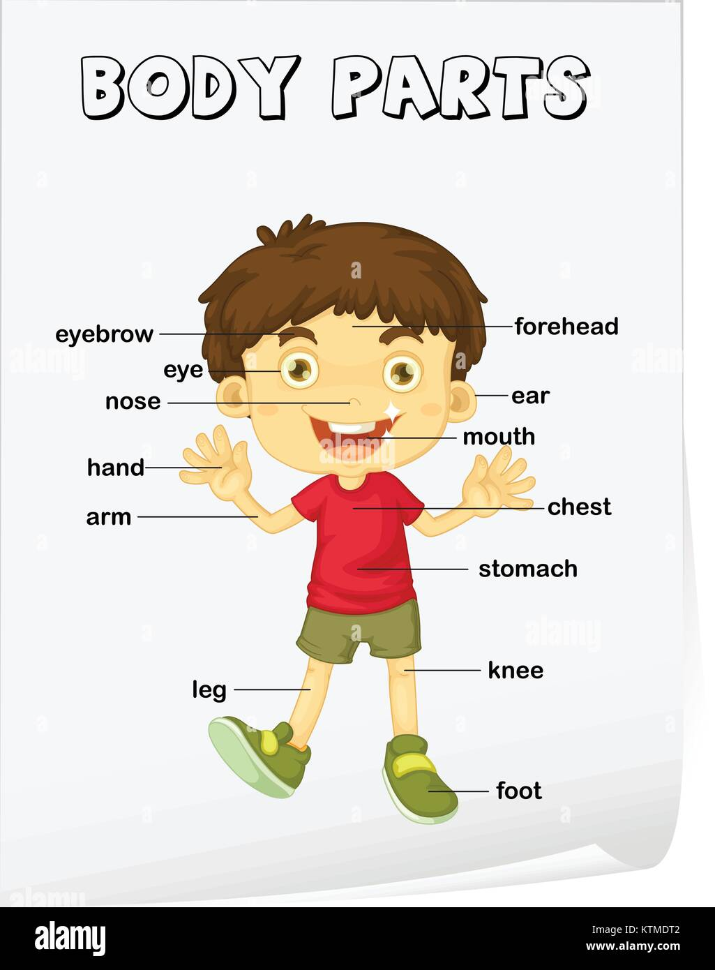 hight resolution of Vocabulary worksheet - parts of the body Stock Vector Image \u0026 Art - Alamy