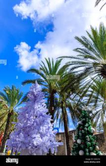 Palm Trees Decorated Christmas Lights Stock &