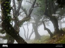 Madeira Trees Stock &