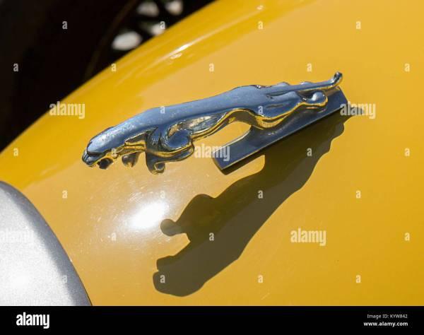 Fierce Jaguar Stock &
