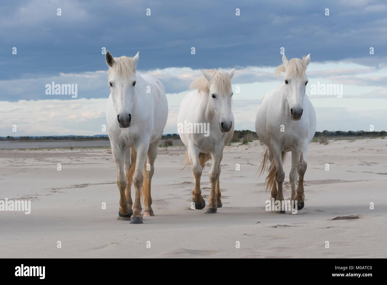 Camargue Badewanne Cornwall Three Maries Stock Photos And Three Maries Stock Images Alamy