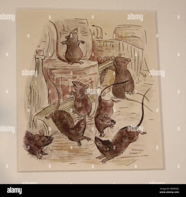 Peter Rabbit Drawing Stock &