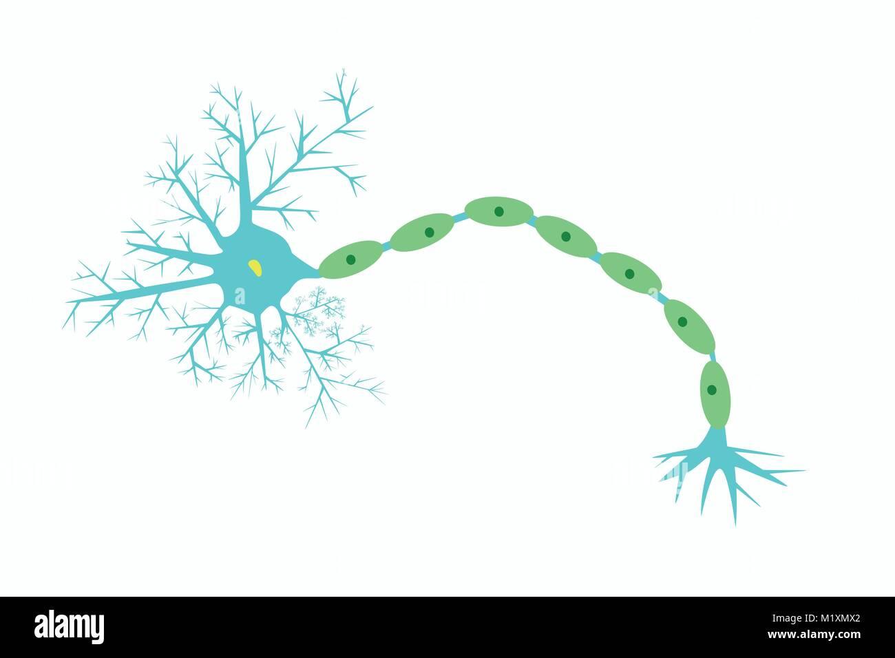 32 Label The Neuron