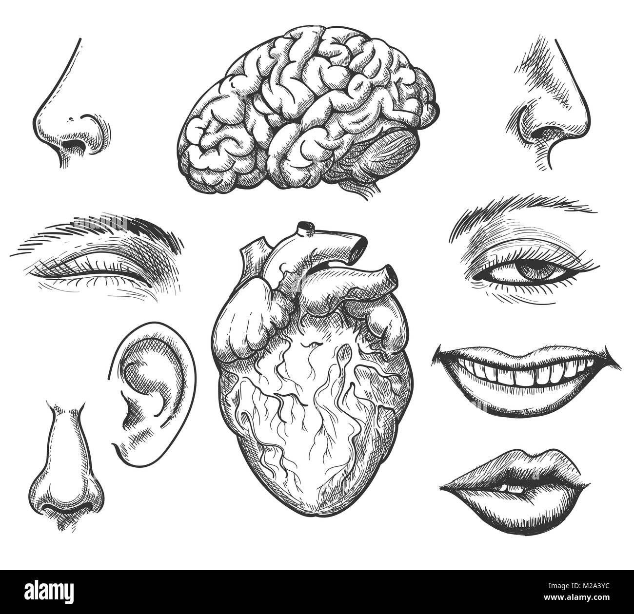 hight resolution of human head organ set like eye nose and mouth and
