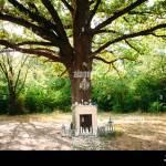 Wedding Decor Wedding Ceremony Under Big Oak Tree Decoration With Stock Photo Alamy