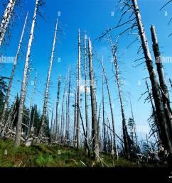 acid rain damaged pine trees in the karkonosze national park in silesia poland 2002  [ 1300 x 1031 Pixel ]