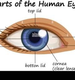 diagram showing parts of human eye illustration [ 1300 x 795 Pixel ]