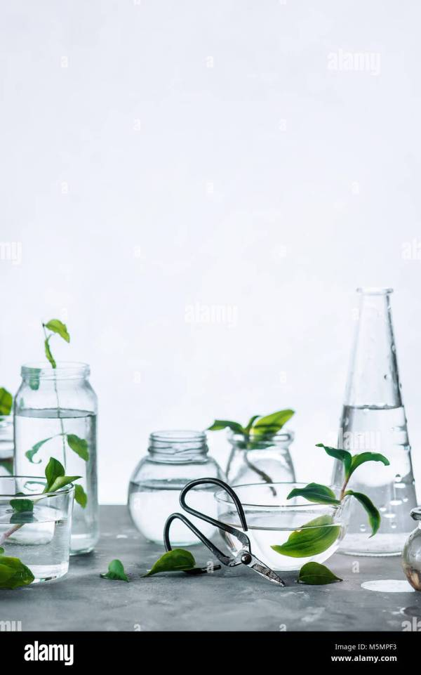 Glass Bottle With Plants Stock Photos & Glass Bottle With Plants Stock Images - Alamy