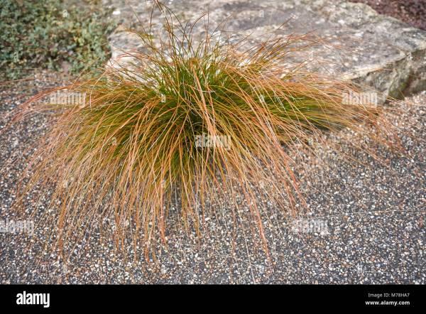 Bronze Foliage Stock & - Alamy