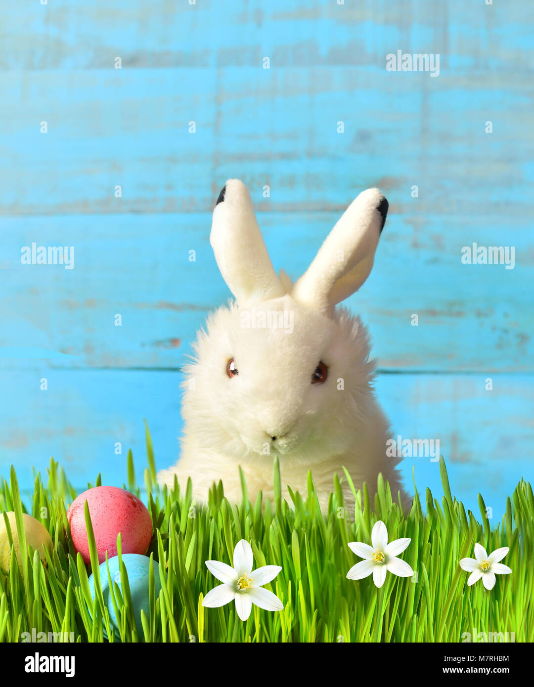 Funny Easter Background Images