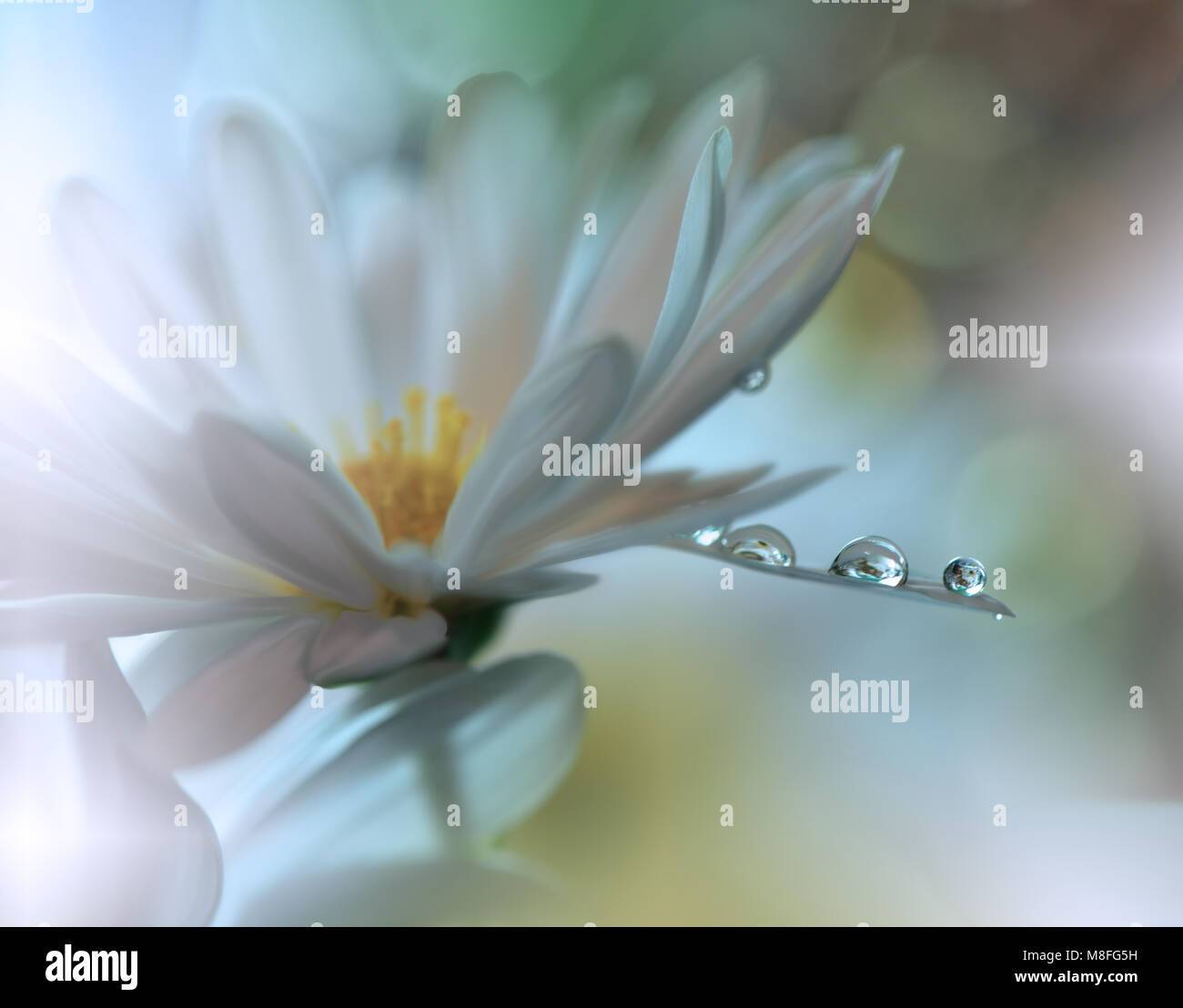 Abstract macro photo with water dropsArtistic Floral