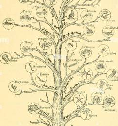 elementary biology an introduction to the science of life cixcuinhet fig 252 genealogical tree of animal life this diagram is intended to suggest the  [ 917 x 1390 Pixel ]